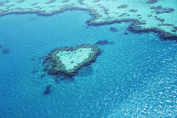 Photo for Great Barrier Reef